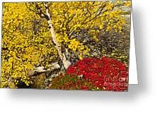 Autumn In Finland Greeting Card