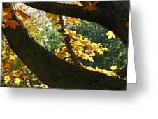 Autumn In London 7916 Greeting Card