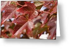 Autumn In My Back Yard Greeting Card