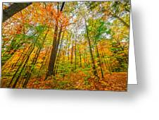 Autumn In The Hocking Hills Greeting Card