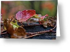 Autumn Ivy In Red Greeting Card
