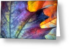 Autumn Leaf Abstract 2 Greeting Card