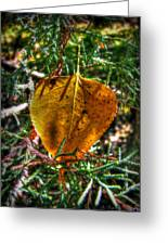 Autumn Leaf And Juniper Needles Greeting Card