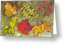 Autumn Leaf Collage Greeting Card