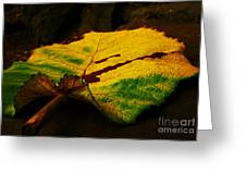 Autumn Leaf Greeting Card by Daniele Smith