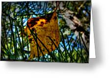 Autumn Leaf In The Pine Needles Greeting Card