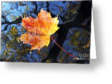 Autumn Leaf On The Water Level Greeting Card