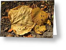 Autumn Leafs Greeting Card