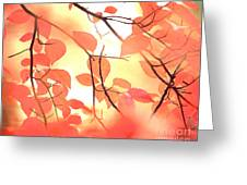 Autumn Leaves Ablaze With Color Greeting Card