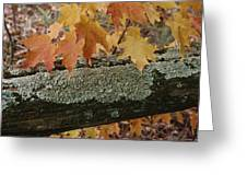Autumn Leaves And A Lichen-covered Log Greeting Card