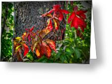 Autumn Leaves High On The Tree Trunk Greeting Card