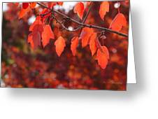 Autumn Leaves In Medford Greeting Card