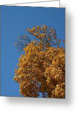 Autumn Leaves In Tn Greeting Card