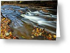 Autumn Leaves In Water II Greeting Card