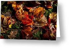 Autumn Leaves On The Moss Greeting Card