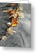 Autumn Leaves Tiny Dam Greeting Card