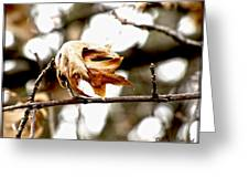 Autumn Leftovers Greeting Card