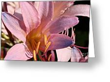 Autumn Lily Greeting Card