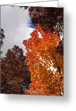 Autumn Looking Up Greeting Card