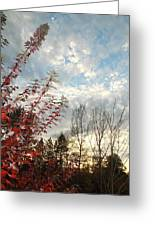 Autumn Maple And Sky Greeting Card