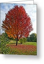 Autumn Maple Emphasized Greeting Card
