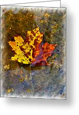 Autumn Maple Leaf In Water Greeting Card