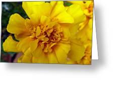 Autumn Marigold 2 Greeting Card