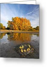 Autumn Nest Greeting Card