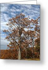 Autumn Oaks White Clouds Greeting Card
