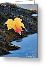 Autumn On The Tellico River - D004558 Greeting Card