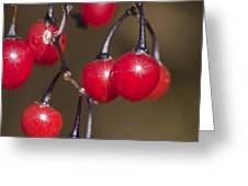 Autumn Red Berry Sparkle Greeting Card