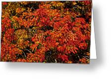 Autumn Red Greeting Card