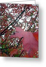 Autumn Red Maple Tree Greeting Card