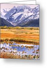 Autumn Reflections Greeting Card by Sharon Freeman