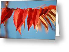 Autumn Scarlet Greeting Card