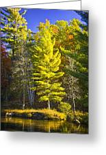 Autumn Scene Of Colorful Trees On The Little Manistee River In Michigan No. 0855 Greeting Card