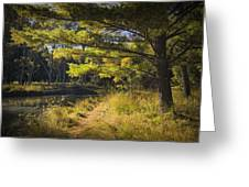 Autumn Scene Of The Little Manistee River In Michigan No. 0882 Greeting Card