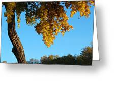 Autumn Shadows_rio Grande Blvd_albuquerque_nm Greeting Card