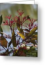 Autumn Snow Berry Bush Greeting Card