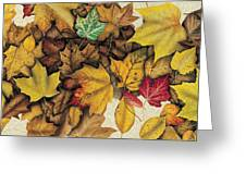 Autumn Splendor Greeting Card by JQ Licensing