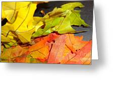 Autumn Spotlight Greeting Card