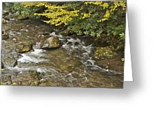 Autumn Stream 6149 Greeting Card