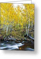 Autumn Stream II Greeting Card