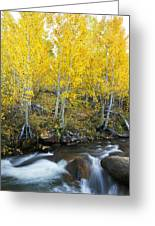 Autumn Stream Iv Greeting Card