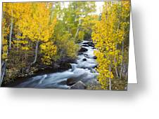 Autumn Stream V Greeting Card
