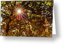 Autumn Sunburst Greeting Card by Carolyn Marshall