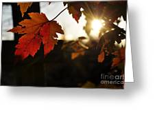 Autumn Sunburst Greeting Card