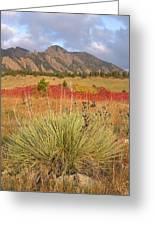 Autumn Sunrise Along The Mesa Trail Greeting Card