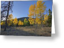 Autumn Sunset In Forest Of Golden Aspen Greeting Card