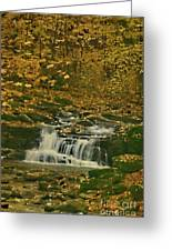 Autumn Surrounded In Color Greeting Card